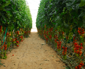 http://www.galilcol.ac.il/spa/Courses/4411/Tecnolog%C3%ADas_de_Irrigaci%C3%B3n_y_Procesos_de_Cultivo