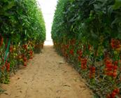 http://www.galilcol.ac.il/por/Courses/4418/Tecnologias_de_Irriga%C3%A7%C3%A3o_e_Processos_de_Cultivo