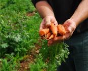 http://www.galilcol.ac.il/fra/Courses/5023/Programme_%C3%A0_la_demande_%3A_Agrobusiness_et_technologies_post-r%C3%A9colte