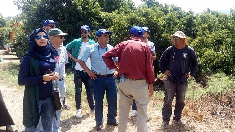 Palestinian-Israeli Cooperation on Avocado Cultivation at Galilee International Management Institute, Nahalal